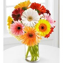 12 Multicolor Gerbera In Vase