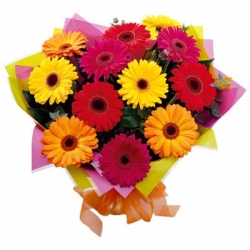 10 Multicolor  Gerbera Bunch