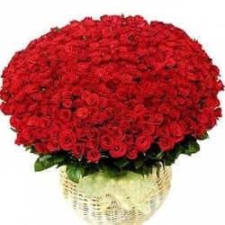 200 Red Rose Basket