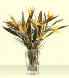Arrangement Of  Bird Of  Paradise In Vase