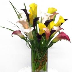 Calla Lilies Special