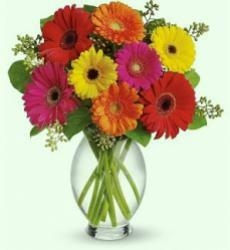 Mixed Color Gerbera  Arrangement