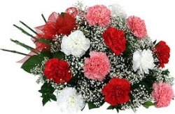 2 Dozen Carnation