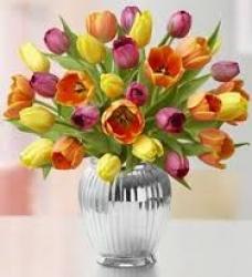 Multicolor Tulip