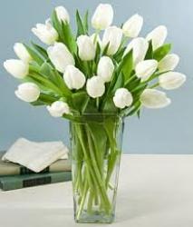 White Tulip In Vase