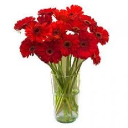 Red Gerbera In Glass Vase