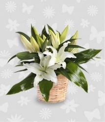 White Lilies Basket Arrangment