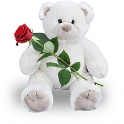 Huge White Teddy And Single Rose