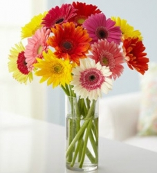Multicolor Gerbera Bunch