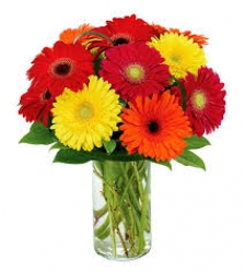 Multicolor Gerbera In Vase