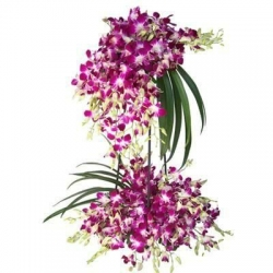 Arrangement Of Orchid  2