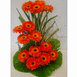 14 Orange Gerbera Basket
