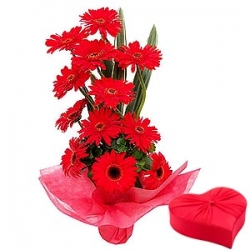 13 Red Gerbera Bouquet