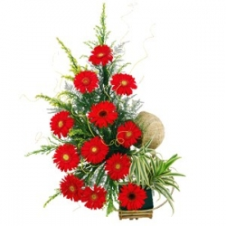 24 Red Gerbera Basket