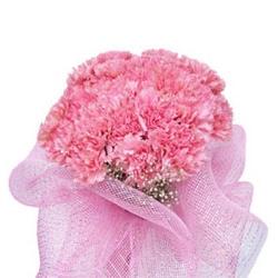Pink Beauty 2