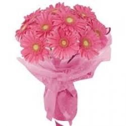 12 Pink Gebera Bouquet