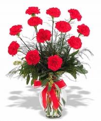 Red Carnation In Vase