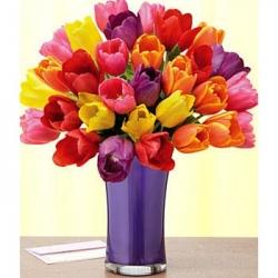 Pretty Multicolor Tulip