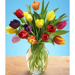 Multicolor Tulip Arrangement
