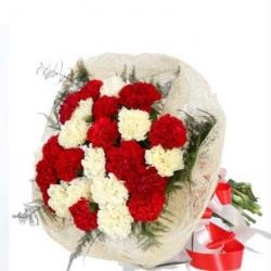 Carnation Carnival - 1