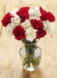 Carnation Carnival - 12