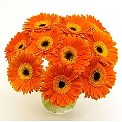 Orange Gerbera Vase Arrangement
